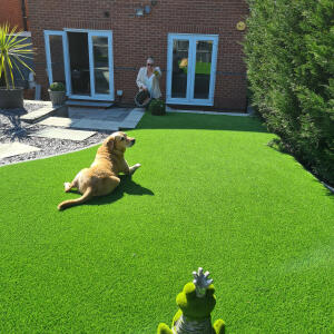 LazyLawn 5 star review on 3rd April 2021