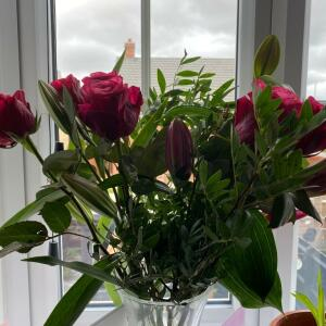 Prestige Flowers 5 star review on 6th August 2020