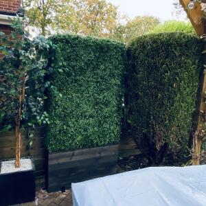 Evergreen Trees & Shrubs 5 star review on 31st October 2020
