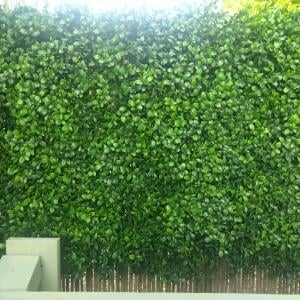 Evergreen Trees & Shrubs 5 star review on 25th July 2021