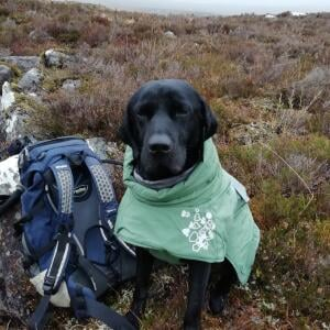 Mountain Dog 5 star review on 19th November 2020