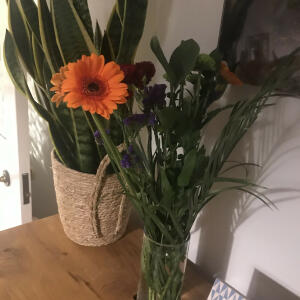 B&M Flowers 4 star review on 8th October 2020