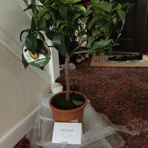 Tree2mydoor 5 star review on 17th June 2020