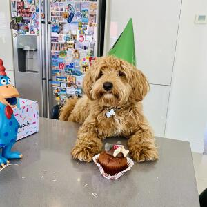 Postman Pooch 5 star review on 12th May 2021