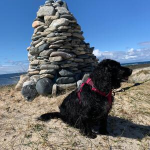 Mountain Dog 5 star review on 15th May 2021
