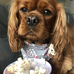 yappy.com 5 star review on 7th June 2020