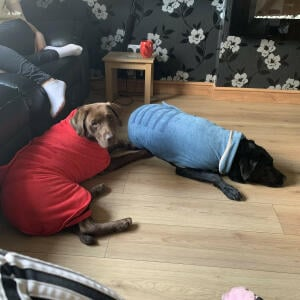 Lords & Labradors 5 star review on 26th May 2020
