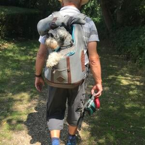 Mountain Dog 4 star review on 3rd July 2020