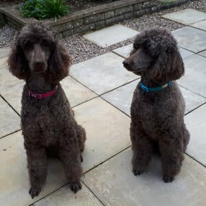 Groomers Online 5 star review on 3rd April 2020