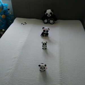 Panda London 5 star review on 20th December 2020