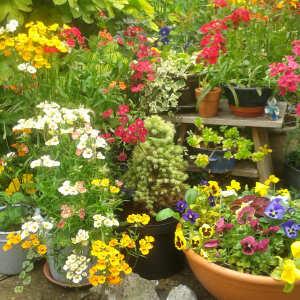 Farmer Gracy Flower Bulbs 5 star review on 15th April 2020
