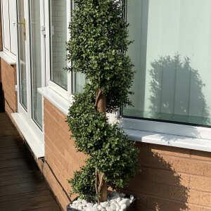 Evergreen Trees & Shrubs 5 star review on 17th September 2020
