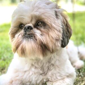 Groomers Online 5 star review on 10th April 2020