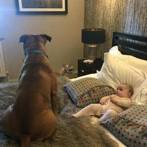PetsPyjamas 5 star review on 26th July 2021