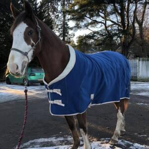 GS Equestrian 5 star review on 9th January 2021
