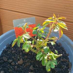 Tree2mydoor 5 star review on 2nd June 2021