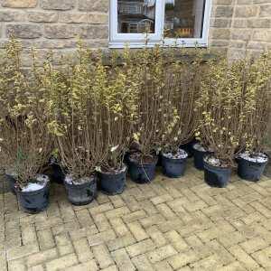 Grasslands Nursery 5 star review on 20th February 2021