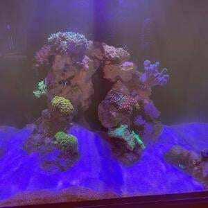 Kraken Corals 5 star review on 6th March 2021