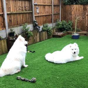 LazyLawn 5 star review on 15th January 2021