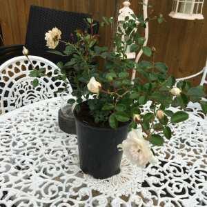 Tree2mydoor 5 star review on 1st September 2021