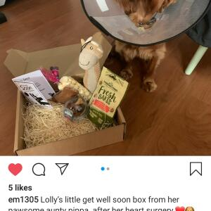 Postman Pooch 5 star review on 19th October 2020