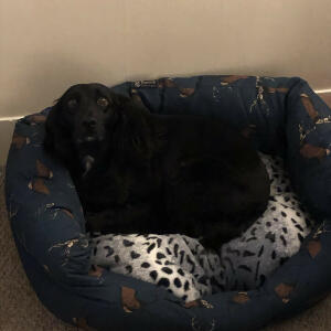 Natural Cornish Pet 5 star review on 7th February 2021