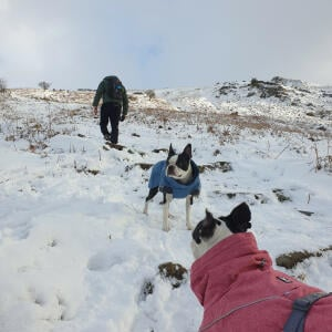 Mountain Dog 5 star review on 16th January 2021