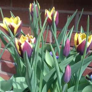 Farmer Gracy Flower Bulbs 5 star review on 22nd June 2021