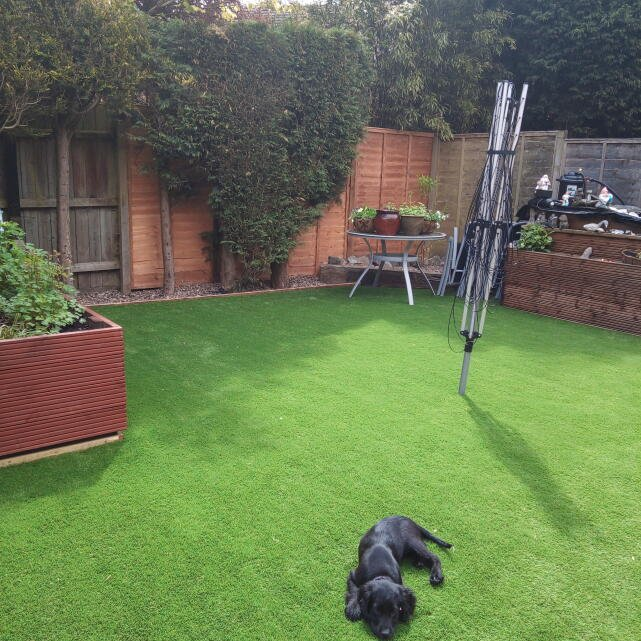 LazyLawn 5 star review on 16th May 2021