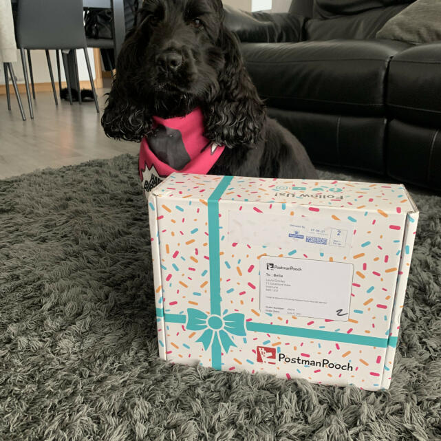 Postman Pooch 5 star review on 22nd June 2021