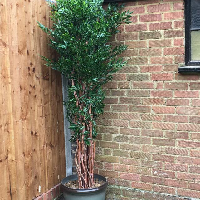 Evergreen Trees & Shrubs 5 star review on 9th March 2018