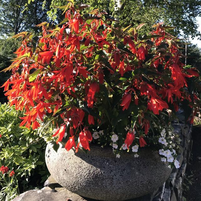 Farmer Gracy Flower Bulbs 5 star review on 16th July 2021