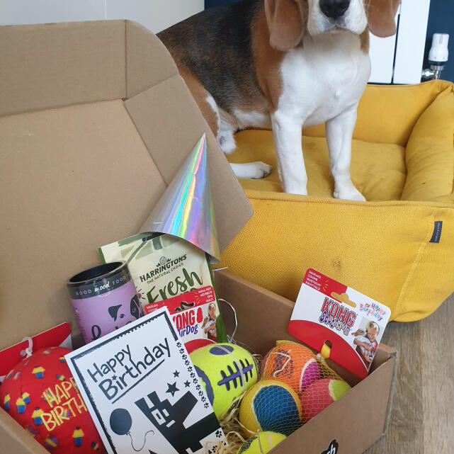 Postman Pooch 5 star review on 30th April 2021