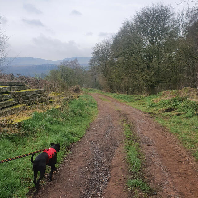 Mountain Dog 5 star review on 20th April 2021