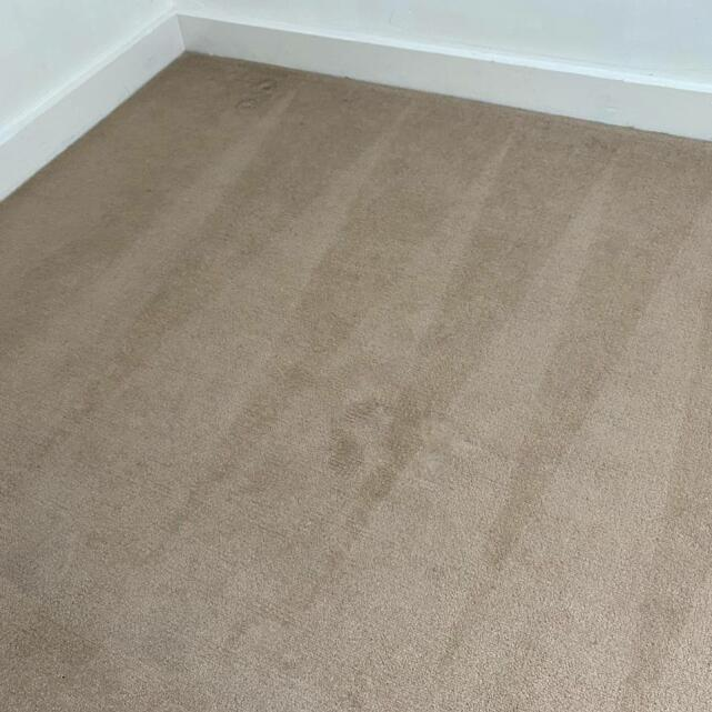 Carpet Bright UK 5 star review on 17th May 2021