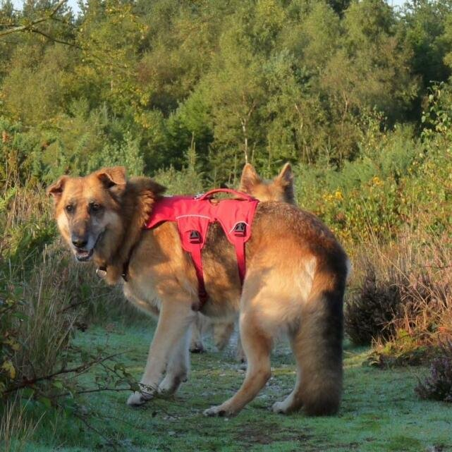 Mountain Dog 5 star review on 20th September 2020