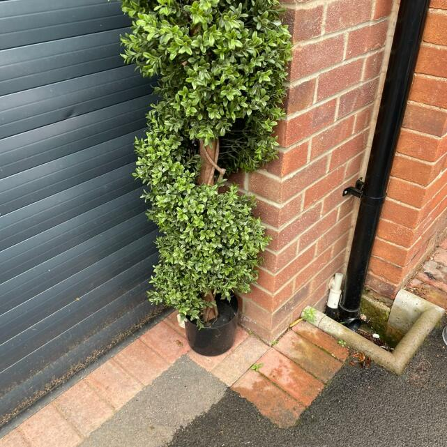 Evergreen Trees & Shrubs 5 star review on 27th July 2021