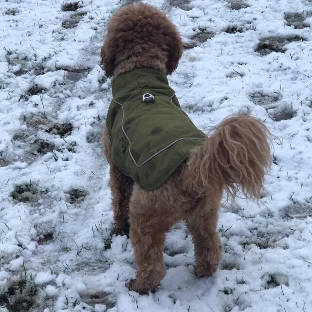 Mountain Dog 5 star review on 21st January 2021