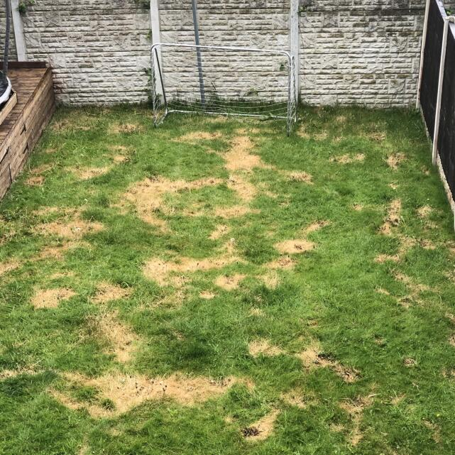 LazyLawn 5 star review on 28th September 2021