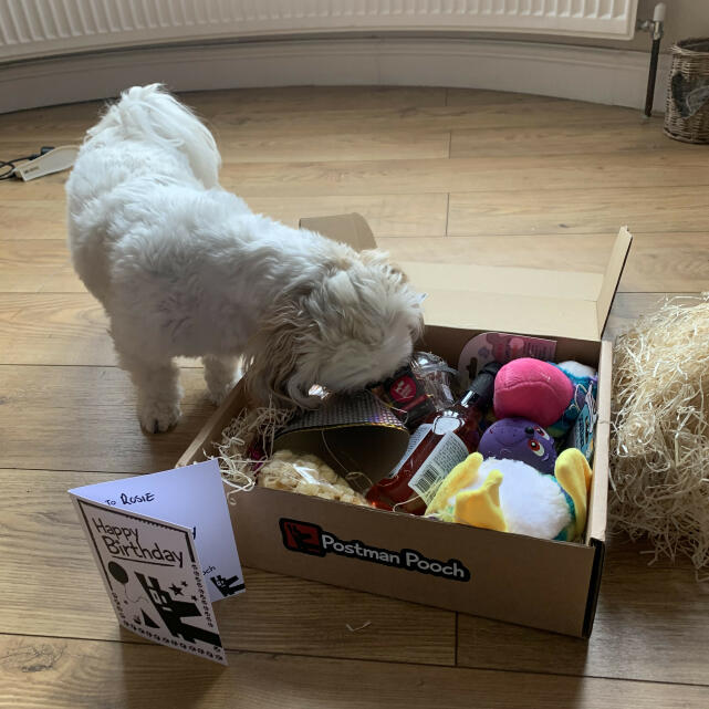 Postman Pooch 5 star review on 5th October 2020