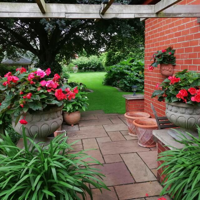 Farmer Gracy Flower Bulbs 5 star review on 13th July 2021