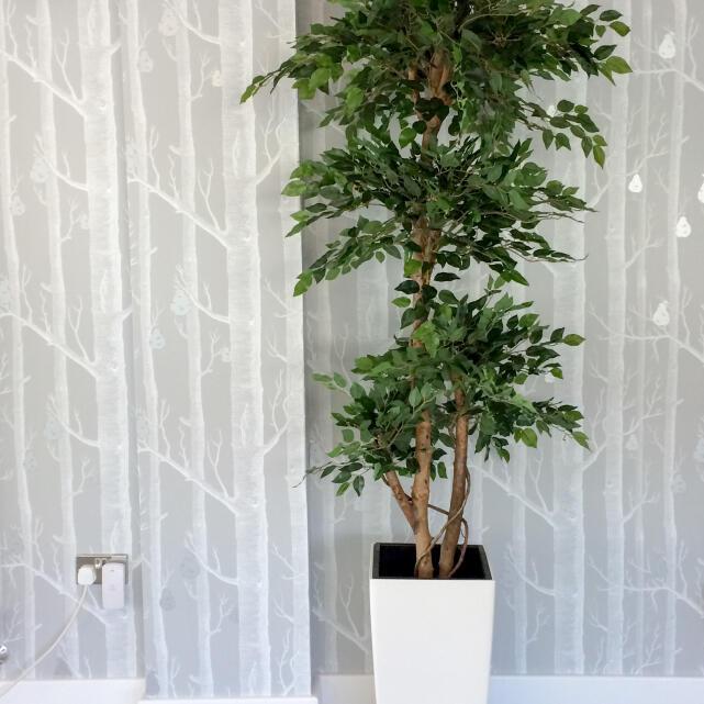Evergreen Trees & Shrubs 5 star review on 16th September 2020