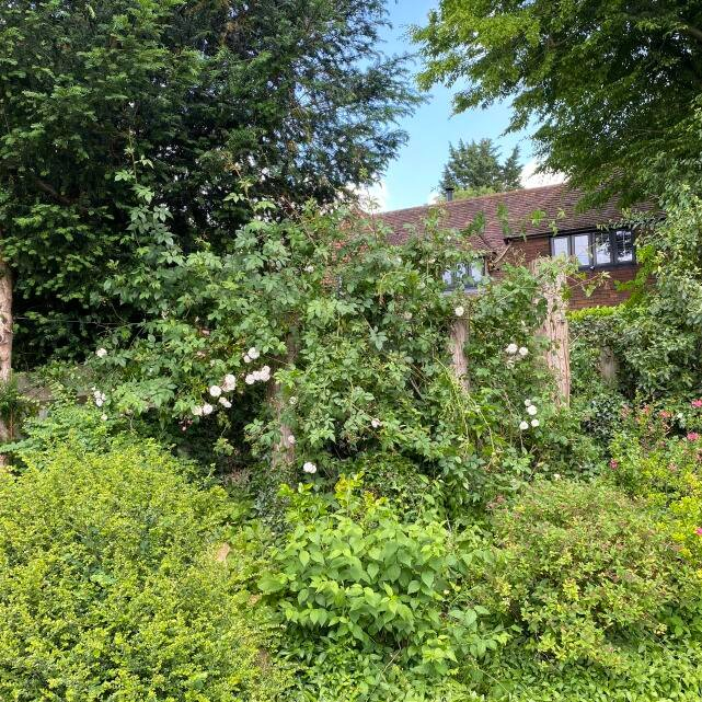 Artemis Tree Services 5 star review on 25th June 2021