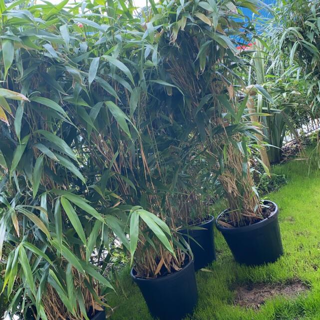Grasslands Nursery 5 star review on 16th July 2021