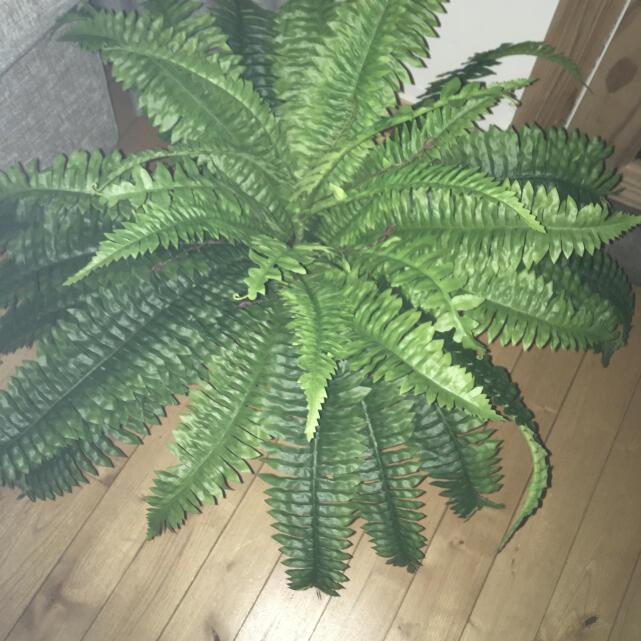 Evergreen Trees & Shrubs 5 star review on 14th December 2019
