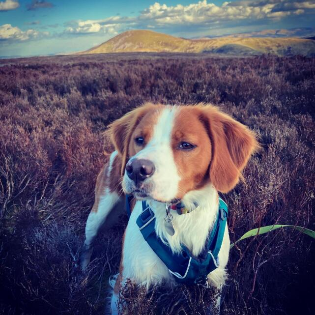 Mountain Dog 5 star review on 19th April 2021