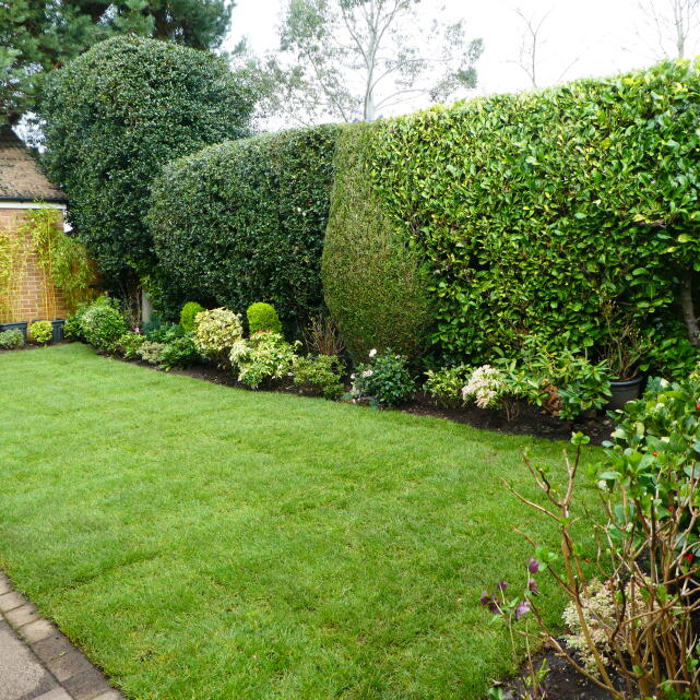 London Lawn Turf Company 5 star review on 2nd April 2019