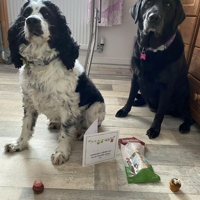 Postman Pooch 5 star review on 13th May 2021
