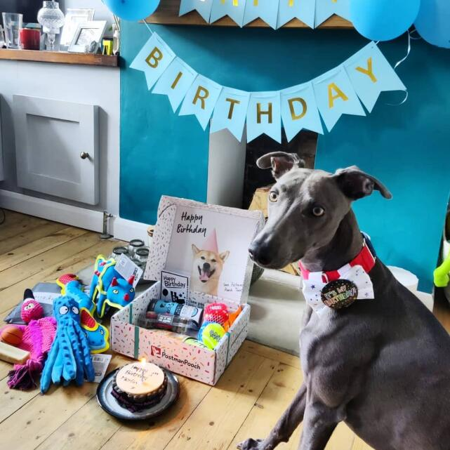 Postman Pooch 5 star review on 15th June 2021