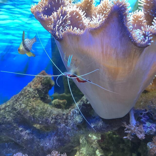 Kraken Corals 5 star review on 31st August 2021